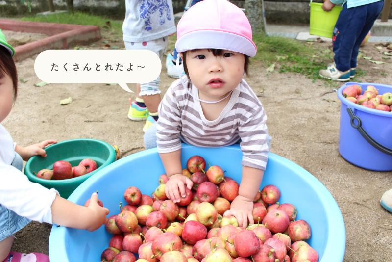 りんご狩りをする子どもたち