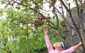 りんごに手をのばす子ども
