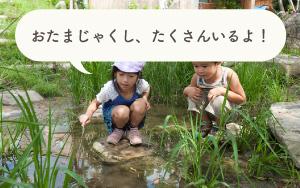 小川と池<